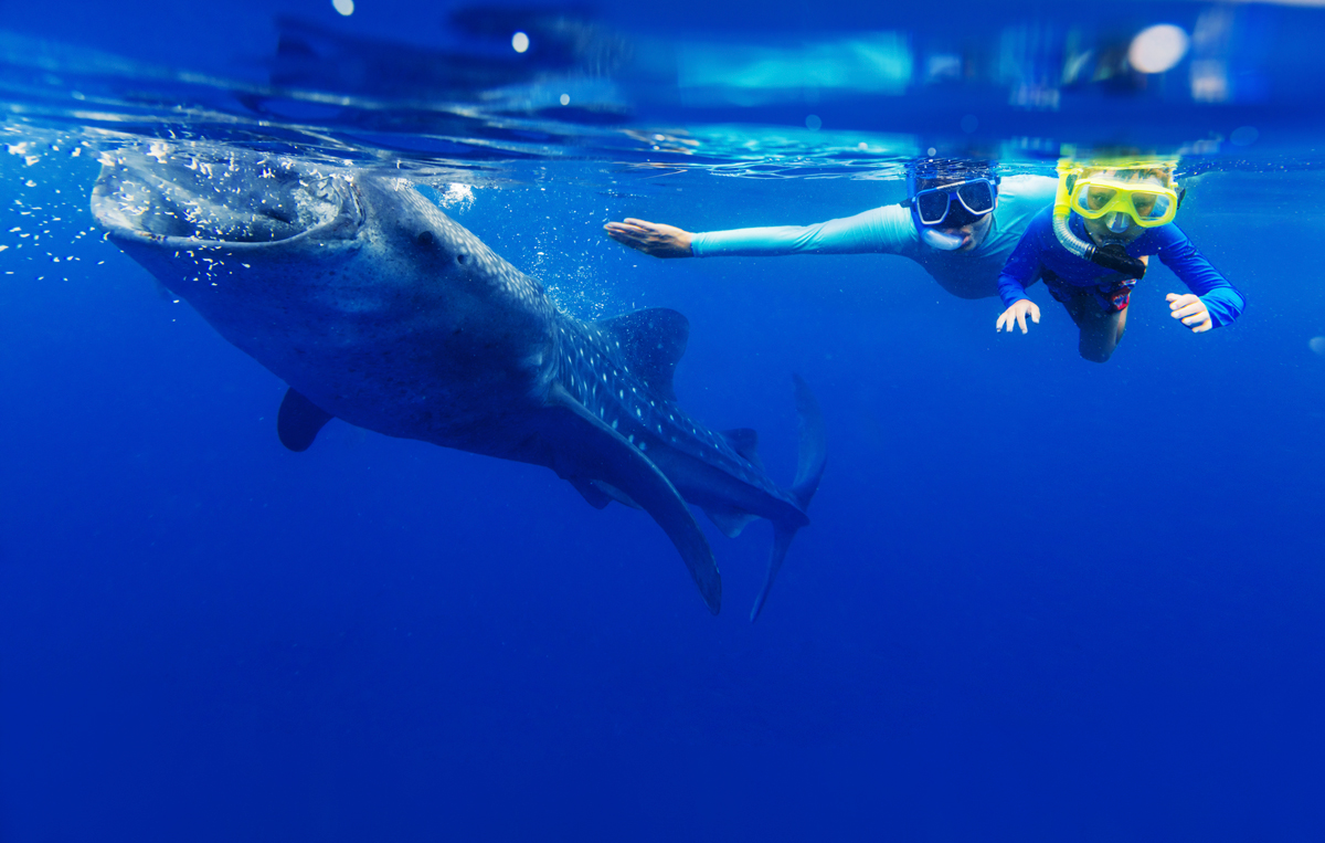 Summer Means Whale Shark Tours